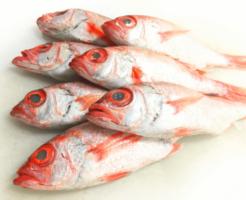 のどぐろ鮮魚