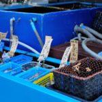 浜田市が誇る水産ブランド「どんちっち」について