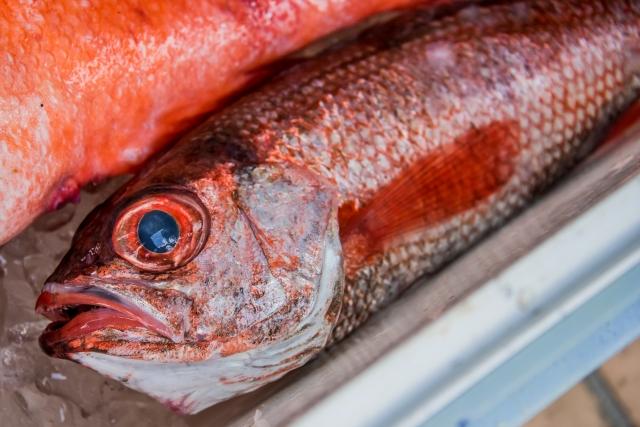 のどぐろ鮮魚②