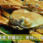山陰の味覚!最高に旨い松葉ガニの美味しい茹で方はコレだ!